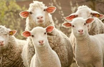 我的爱好是薅羊毛!